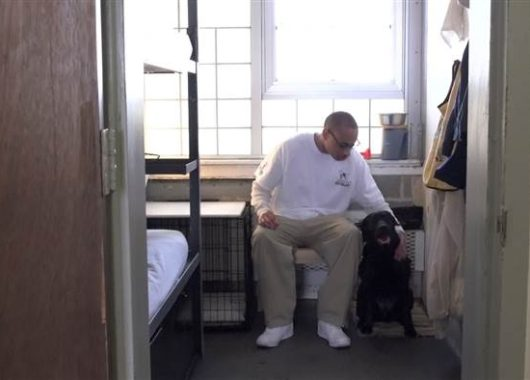Dogs and Inmates Changing Vets Lives Upliff